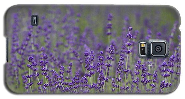 Purple Haze Galaxy S5 Case by Rebecca Cozart