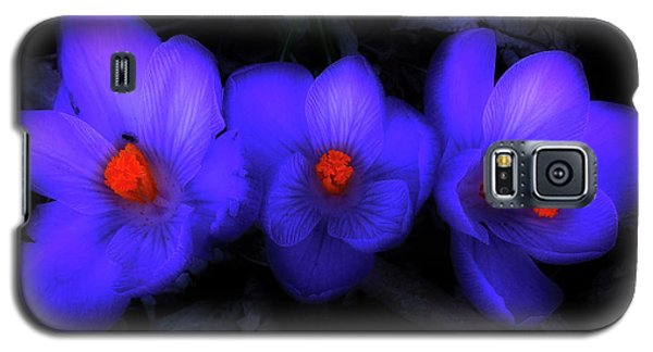 Beautiful Blue Purple Spring Crocus Blooms Galaxy S5 Case by Shelley Neff