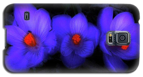 Beautiful Blue Purple Spring Crocus Blooms Galaxy S5 Case