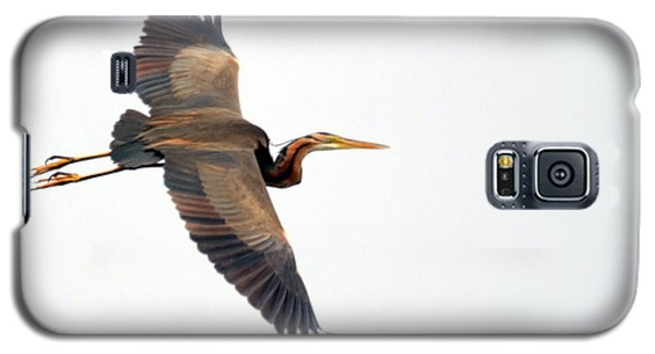 Purple Heron In Flight Galaxy S5 Case