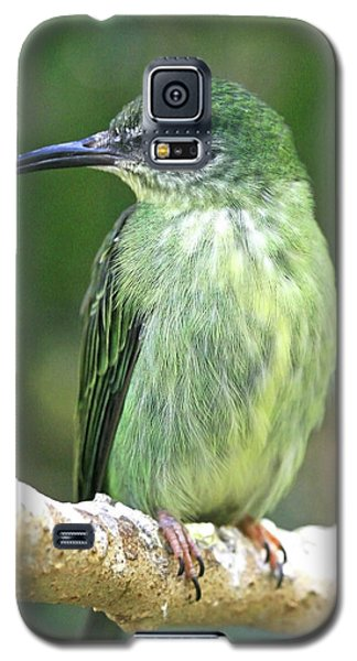 Purple Honeycreeper Female Galaxy S5 Case