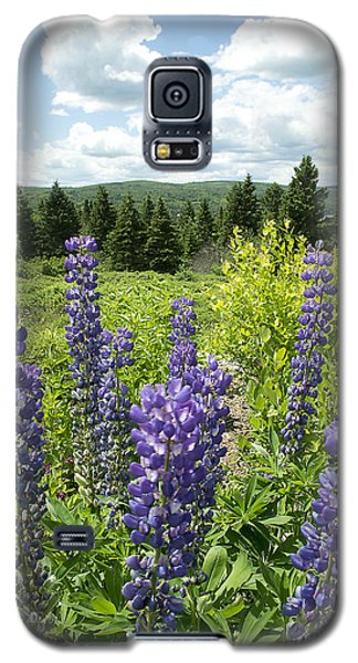 Galaxy S5 Case featuring the photograph Purple Lupines by Paul Miller