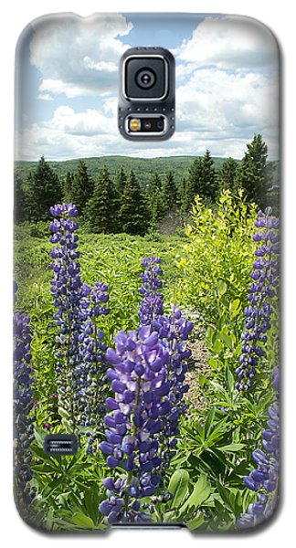 Purple Lupines Galaxy S5 Case by Paul Miller