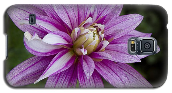 Purple Pink Dahlia Galaxy S5 Case