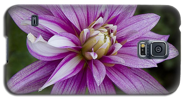 Purple Pink Dahlia Galaxy S5 Case