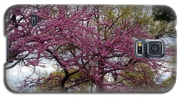 Purple Spring Trees Galaxy S5 Case