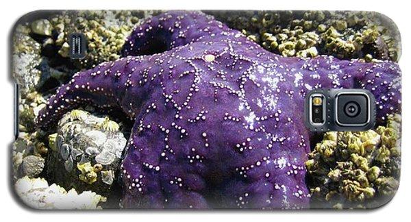 Purple Star Fish Galaxy S5 Case