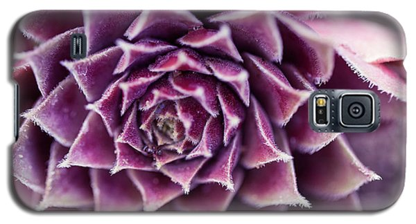 Galaxy S5 Case featuring the photograph Purple Succulent Plant Blossom In Summer by Jingjits Photography