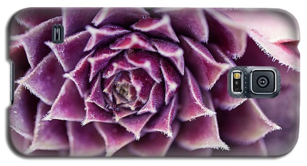 Purple Succulent Plant Blossom In Summer Galaxy S5 Case