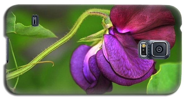 Purple Sweet Pea Galaxy S5 Case by Marjorie Imbeau