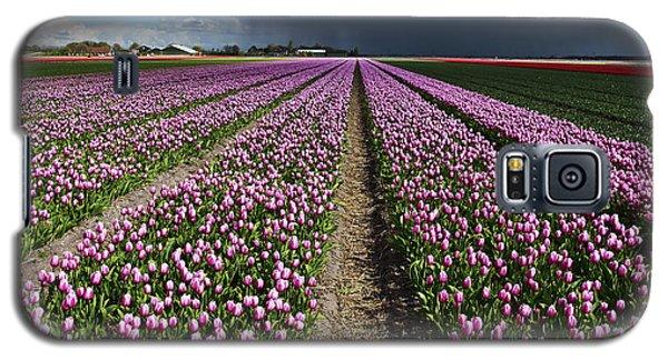 Purple Tulips Field Galaxy S5 Case