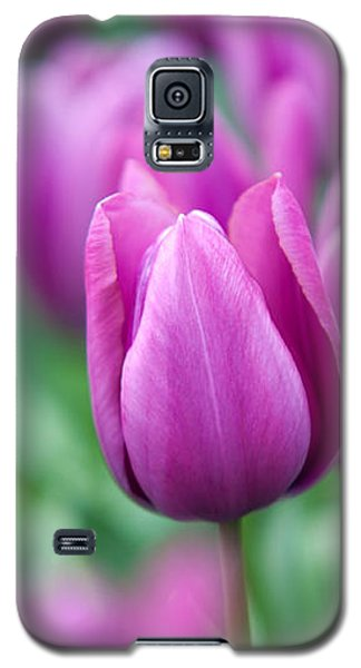 Purple Tulips Of Keukenhof Galaxy S5 Case by Jenny Rainbow