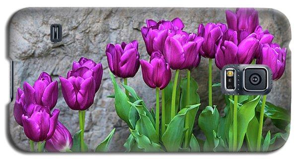 Galaxy S5 Case featuring the photograph Purple Tulips by Tom Mc Nemar