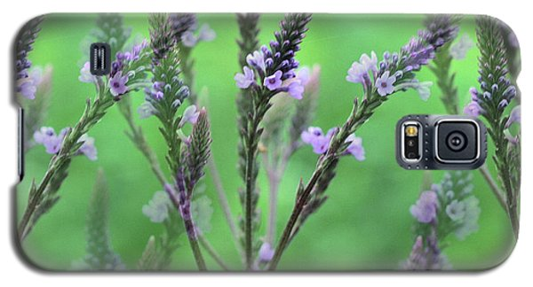 Purple Vervain Dreams Galaxy S5 Case