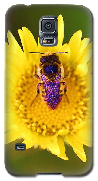 Galaxy S5 Case featuring the photograph Purple Wings by John King