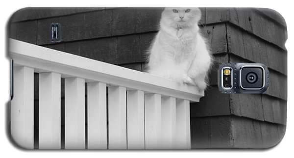 Pussy Cat Galaxy S5 Case
