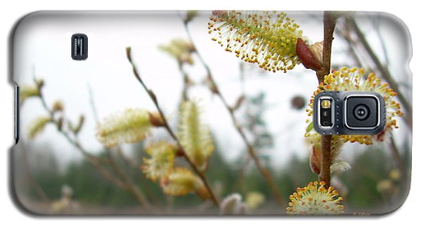 Pussy Willow Blossoms Galaxy S5 Case by Kent Lorentzen