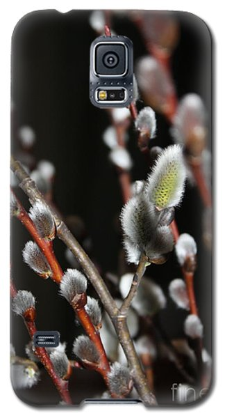 Pussy Willow Galaxy S5 Case by Marjorie Imbeau
