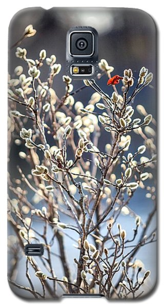 Pussy Willow Galaxy S5 Case