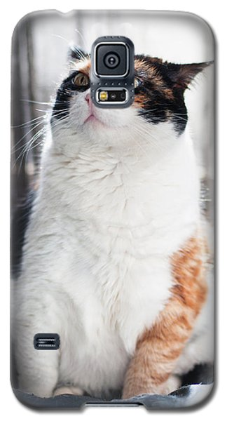 Puzzled Galaxy S5 Case by Laura Melis