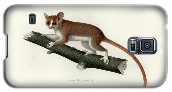 Pygmy Mouse Lemur Galaxy S5 Case