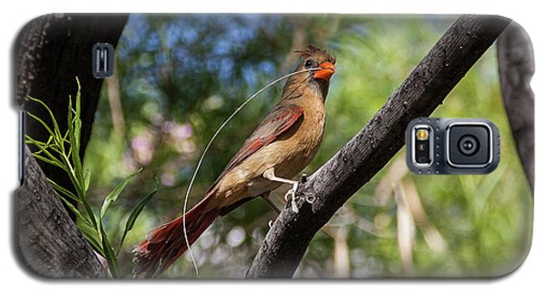Pyrrhuloxia At Work Galaxy S5 Case
