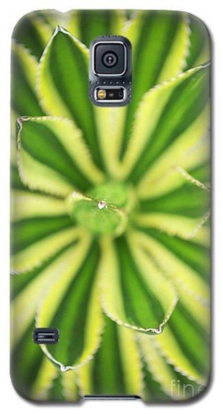 Quadricolor Agave Plant Galaxy S5 Case