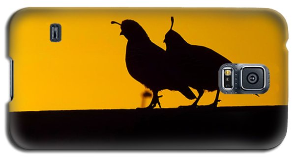 Quail At Sunset Galaxy S5 Case
