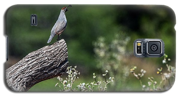 Quail Watching Galaxy S5 Case