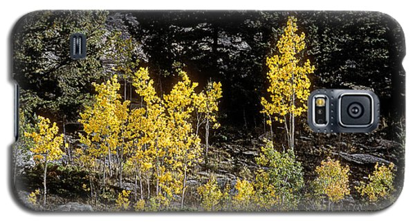 Aspens In Fall At Eleven Mile Canyon, Colorado Galaxy S5 Case