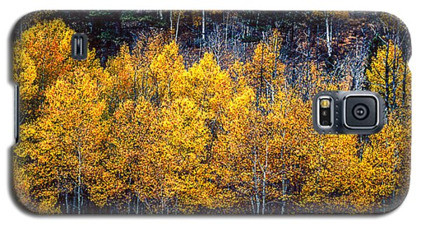 Aspen In Fall Colors In Eleven Mile Canyon Colorado Galaxy S5 Case