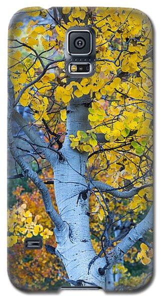 Quaking Aspen Galaxy S5 Case