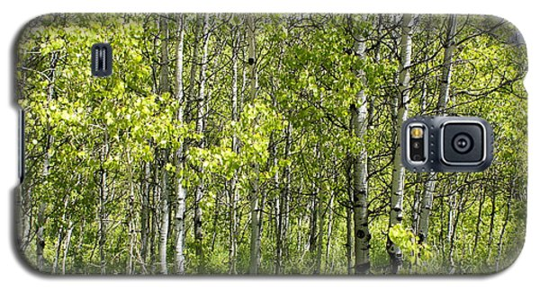 Galaxy S5 Case featuring the photograph Quaking Aspens 2 by Cynthia Powell