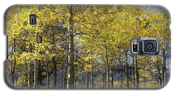 Galaxy S5 Case featuring the photograph Quaking Aspens by Cynthia Powell