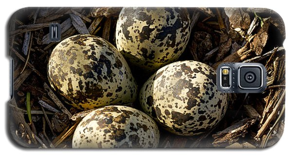Quartet Of Killdeer Eggs By Jean Noren Galaxy S5 Case by Jean Noren