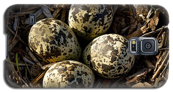 Quartet Of Killdeer Eggs By Jean Noren Galaxy S5 Case