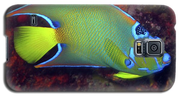 Queen Angelfish, U. S. Virgin Islands 2 Galaxy S5 Case