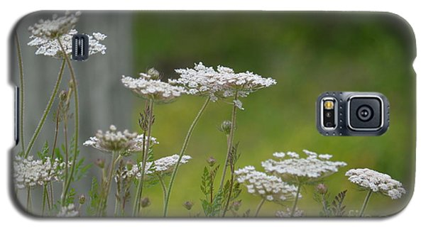 Queen Anne Lace Wildflowers Galaxy S5 Case