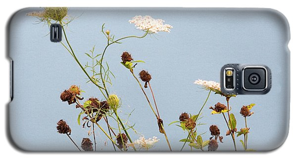 Queen Anne's Lace And Dried Clovers Galaxy S5 Case