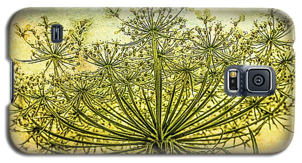Queen Anne's Lace At Sunrise Galaxy S5 Case