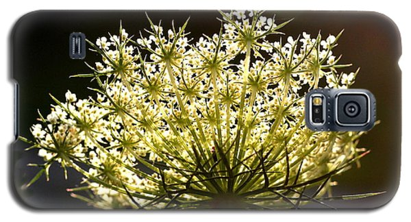 Galaxy S5 Case featuring the photograph Queen Anne's Lace by Diane Merkle