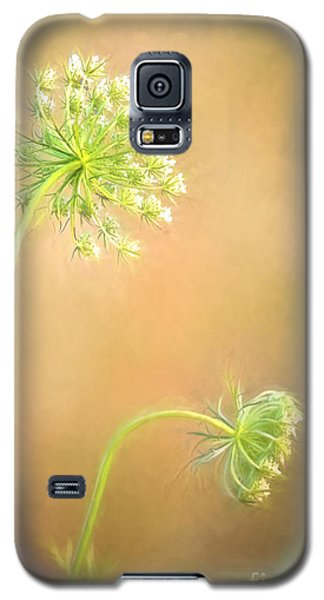 Queen Anne's Lace Galaxy S5 Case by Laurinda Bowling