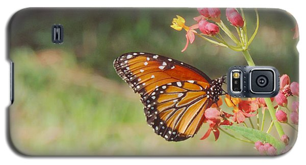 Queen Butterfly On Milkweed Galaxy S5 Case