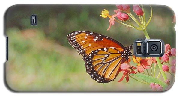 Queen Butterfly On Milkweed Galaxy S5 Case by Jayne Wilson