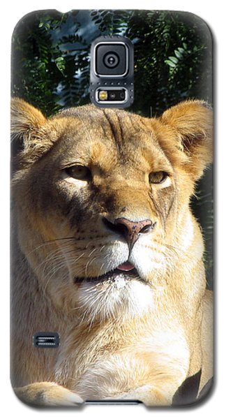 Queen Of The Beasts Galaxy S5 Case by George Jones