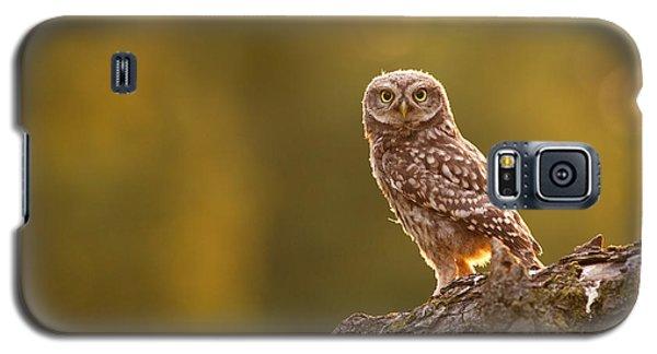 Qui, Moi? Little Owlet In Warm Light Galaxy S5 Case by Roeselien Raimond