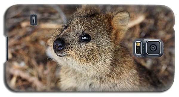 Quokka Galaxy S5 Case