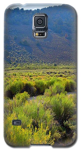 Rabbit Brush In Bloom Galaxy S5 Case