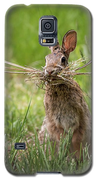 Rabbit Collector  Galaxy S5 Case by Terry DeLuco