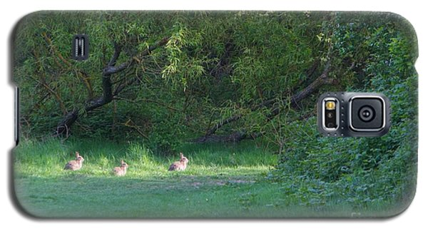 Rabbit Meadow Galaxy S5 Case by Gary Bridger